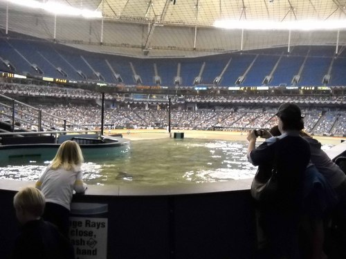 Rays tank in the Trop