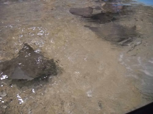 Rays in Ray Tank